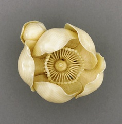 Tsukamoto Kyokusai (Japan)   Camellia, late 19th-early 20th century  Netsuke, Ivory with light staining, sumi