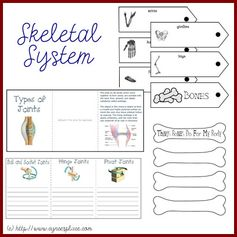 Anatomy Lapbook - Skeletal System