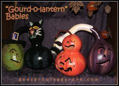 "My ""Gourd-o-lantern"" Babies by Angie Ouellette-Tower @ godsgrowinggarden.com"