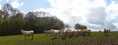 Est-ce le troupeau qui nous regarde ou nous qui regardons le troupeau ? Ou le contraire ? Ou les deux...