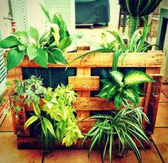 Pallet planters #Pallet, #Planter