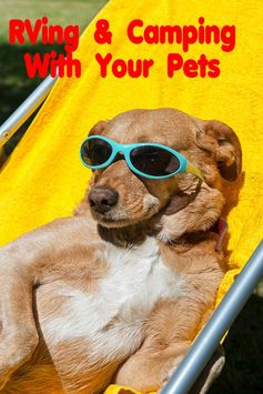Your pets should always be a part of your #RV lifestyle.