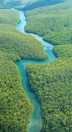 The Amazon, Ecuador – Natural Beauty in South America...i would LOVE to go to south america, but the crime really scares me.  i might just have to risk it tho.  LCL
