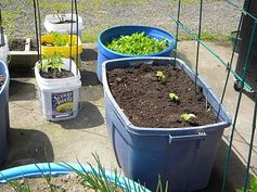 Learn how to do container gardening the efficient way in your #RV!