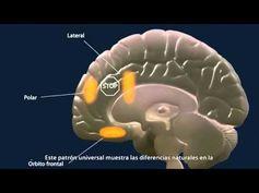 Vídeo divulgativo de la Universidad de Navarra sobre el cerebro adolescente http://www.unav.es/ Desarrollo cerebral durante la adolescencia, y cómo la inmadu...