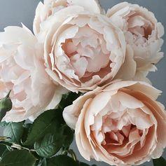 Petals that inspire... x Stella
