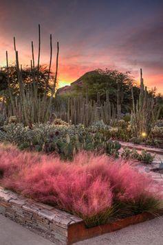 Beautiful botanical garden in #Pheonix, #Arizona!