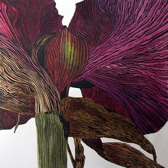 Irene Helen MacKenzie: Dark amaryllis, linocut print in hand coloured variable limited edition