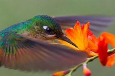 hummingbird.jpg (720×481)