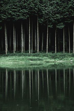 Desvre - Forest
