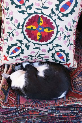 To be a cat in Istanbul
