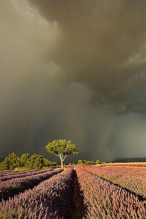 33 Outstanding Colors and Details of Natural Landscapes - Como estou me sentindo hoje. ... #rain