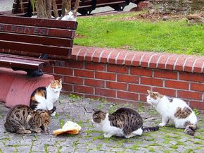 Why Are There So Many Cats on the Streets of Istanbul? - The cats of Istanbul