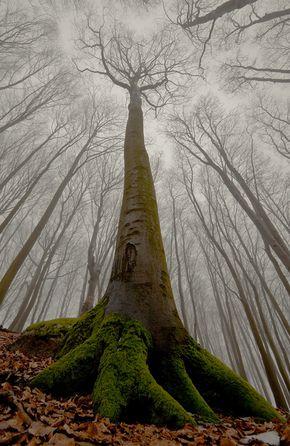 rainbowadvaya:  fuckyeahtrees:  treeroots:  verymuch:  The beech with human face. by Leszek Paradowski Nice Find!