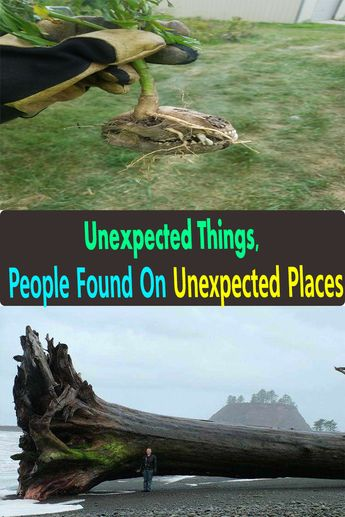 Unexpected Things, People Found On Unexpected Places