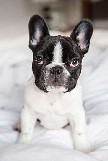 Batpig & Me Tumble It • Meet Mouse, 12 weeks old, but cute beyond his...