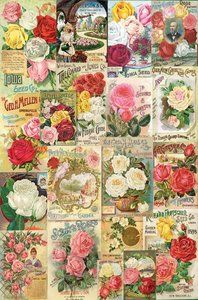 Smithsonian: Roses Seed Catalogue (1000 Piece Puzzle by Eurographics)