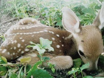 baby #deer