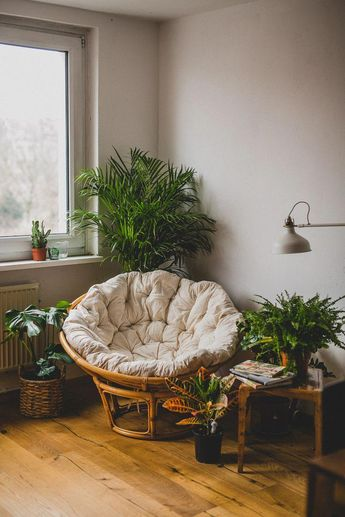 We are a photographer and a videographer, this is a tiny corner of our sweet home with our papasan chair and lot`s of plants <3 #papasan #corner #deco #home #house #reading #plants #weloveplants #sauvagehome #homedecorbedroommen