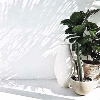 The amazing Bauwerk limewash paint is now in stock! Create an organic vibe at home with this natural lime paint. Perfect for some summer DIY [shop link in our bio] @mon_palmer via @bauwerkcolour #indieliving #indiehomecollective