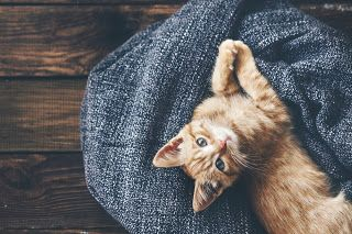 Here are some cat adoption tips to make the process easy, fast and fun!