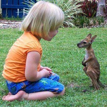 baby kangaroo with girl