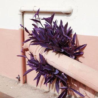 Unexpected planting #floral #inspo #moodboard #pantone #colourpalette #pastel