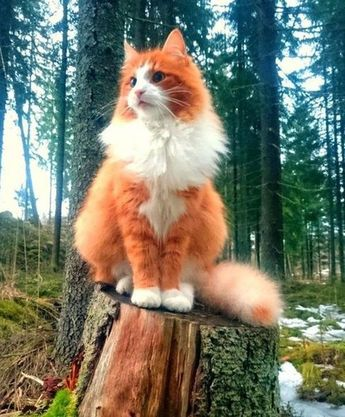 I am king of this forest! …