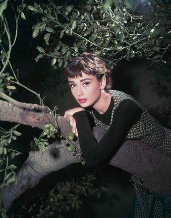 Audrey Hepburn - Fan club album