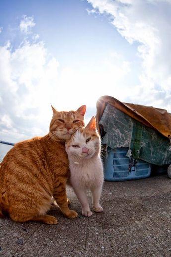 Pek Güzel Şeyler: Kedi Adası Japonya'daki Tashirojima Adası'nın kedi nüfusu, insan nüfusunu aşmış durumda. Kedi Adası olarak da bilinen ada halkını yaklaşık 100 balıkçı ve elbette her yanı istila etmiş kediler oluşturuyor. Adada hiç köpek yok. Japonların kedi beslemenin şans ve para getireceği inancı, adanın kedilerle dolup taşmasına neden olmuş. Fotoğrafçı Fubirai, bu şahane yeri fotoğraflamış: