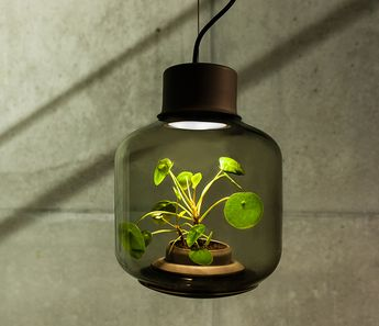 How to Grow Plants in Windowless Spaces with Pendant Lighting • iD...