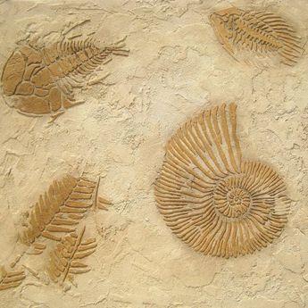 Stencil Large Ammonite Fossil - Raised plaster stencils for walls