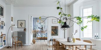 10 Oversized Houseplants That Prove Bigger Is Better
