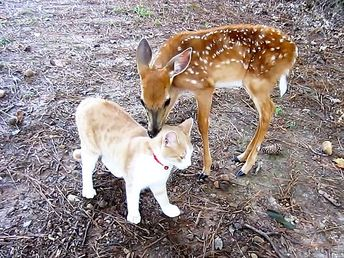 Celebrate National Best Friends Day with These 15 Interspecies Animal Friendships