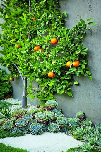 Espaliered Fruit Trees: Small Space Orchard Garden