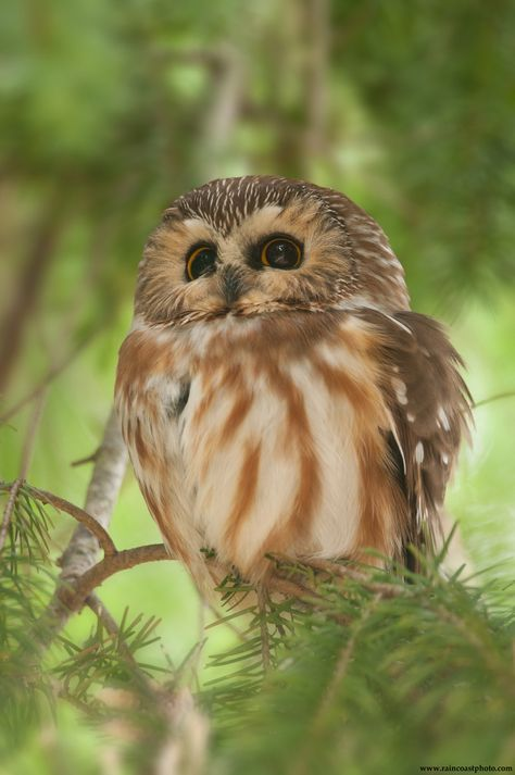 Beautiful owl species