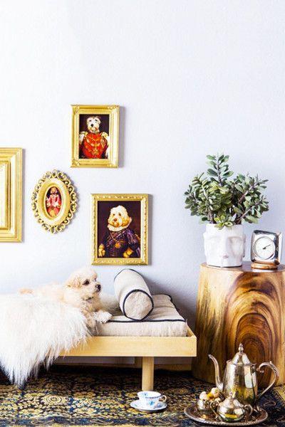 Art Aficionado - 30 Pets That Stole The Show In Home Shoots - Photos