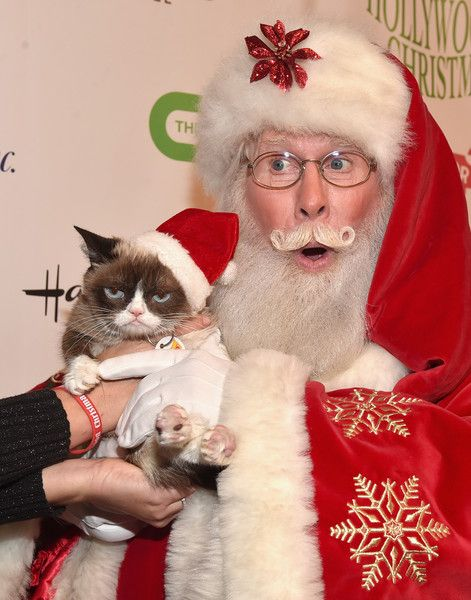 Grumpy Cat (L) and Santa attend 2015 Hollywood Christmas Parade on November 29, 2015 in Hollywood, California.