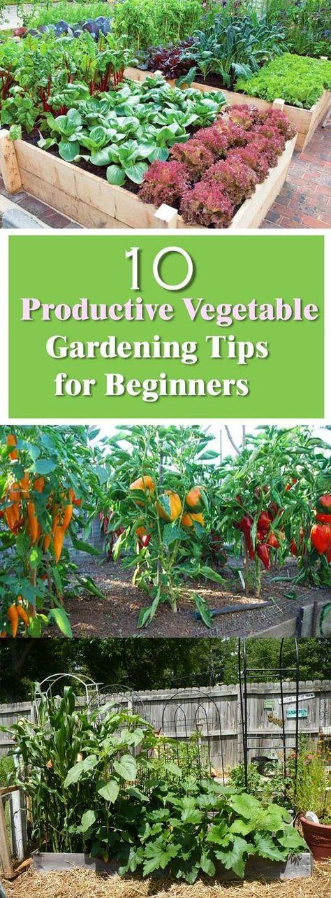 Beginner's Guide for Productive Vegetable Garden