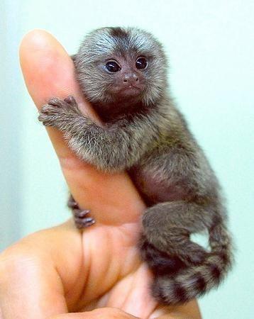 Cute rainforest monkeys