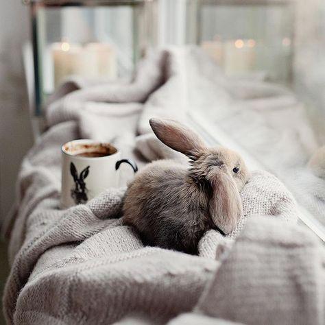 Hot chocolate in my favorite mug,and Buns to keep me company~