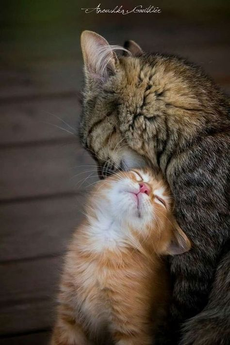 🧡 Maman Chat et son chaton 🧡 #chatjadore    #chats #animauxdecompagnie #chatons #chaton  #felin  #miaou #leschats #chat #animaux #shopping #boutique #objetchat #articlechat  #followforfollow #cat #beautiful #bébéchat #bébénanimaux #amourdechat