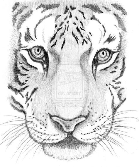 Tiger face pencil drawing