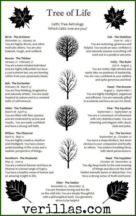 Celtic Meaning of the Oak Tree  Whats Your Sign