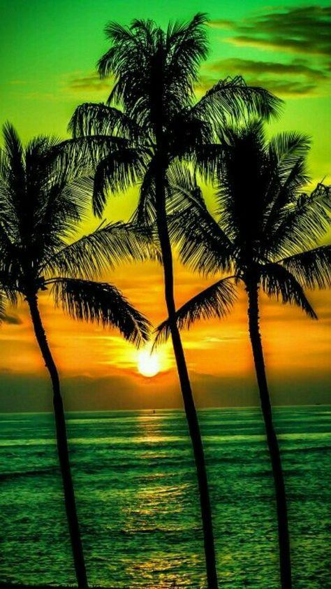 Green, Golden Yellow Palm tree, sun setting, beach, art