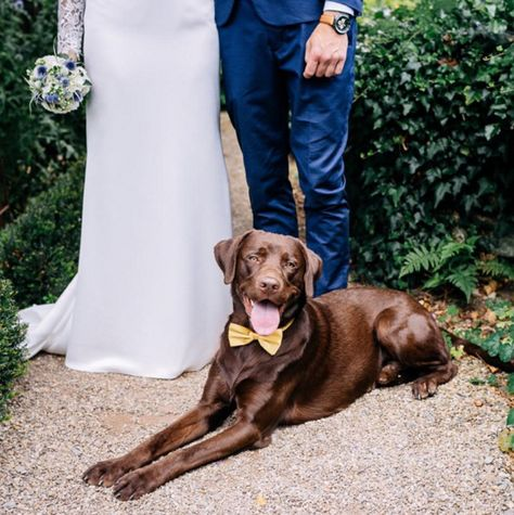 A Yellow Bow-Tie - The Cutest Wedding Dogs on Instagram - Photos
