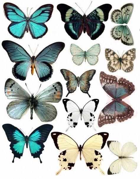 Бабочка скрапбукинг