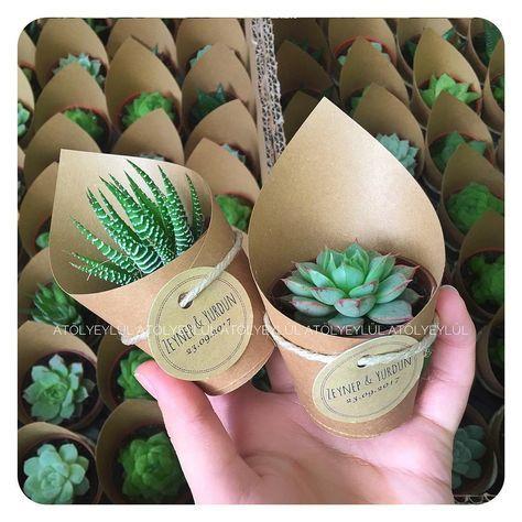 Cute Wedding Favor Idea! Beautiful small succulent