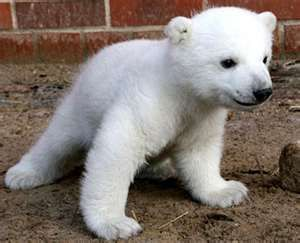 Image Search Results for cute baby animals