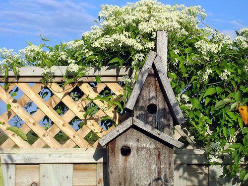 birdhouses #birdhouses